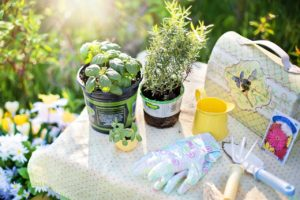 herbs to plant pic